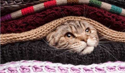 Как руна Соуло котенку жизнь спасла